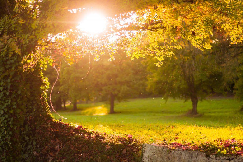 Der Herbst in Göttingen - Events und Veranstaltungen